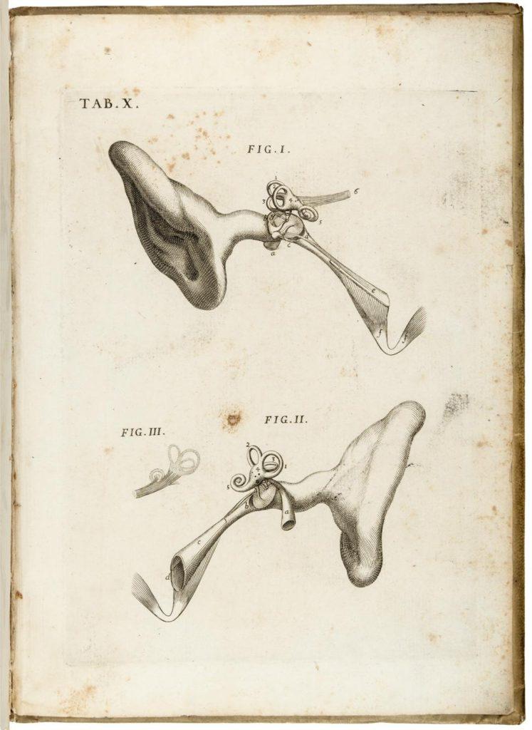 Tavola X del trattato di Valsalva sulla natura dell'orecchio